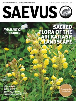 Saevus September - November 2018 Magazine