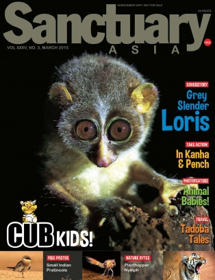 Sanctuary Cub March 2015 Magazine