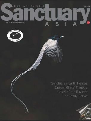 Sanctuary Asia December 2013 Magazine