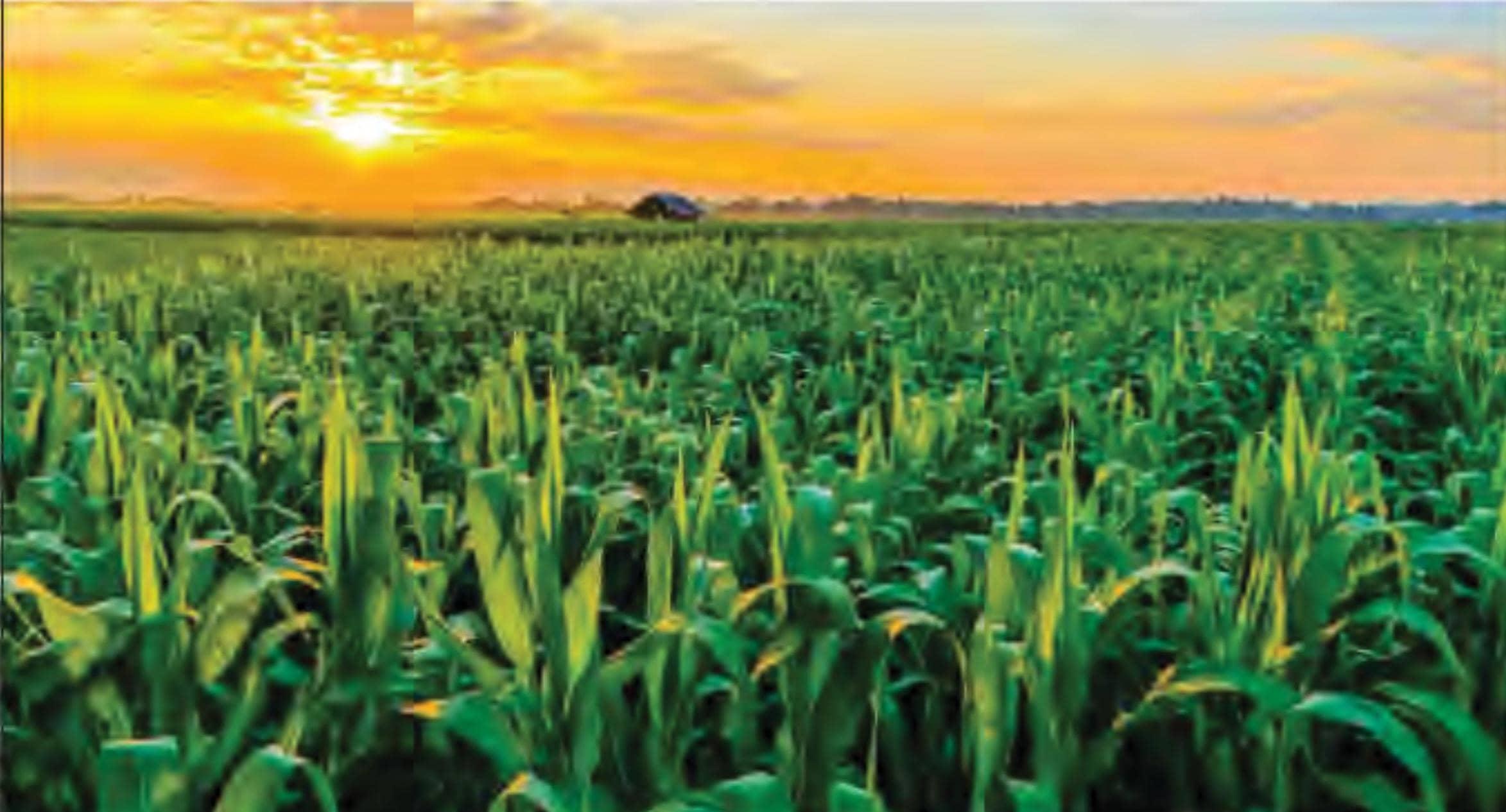 क्या भारत फिर कृषि प्रधान बनेगा?