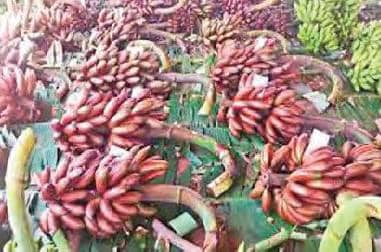 சிவகங்கையில் செவ்வாழை பழம் கிலோ ரூ.60க்கு விற்பனை