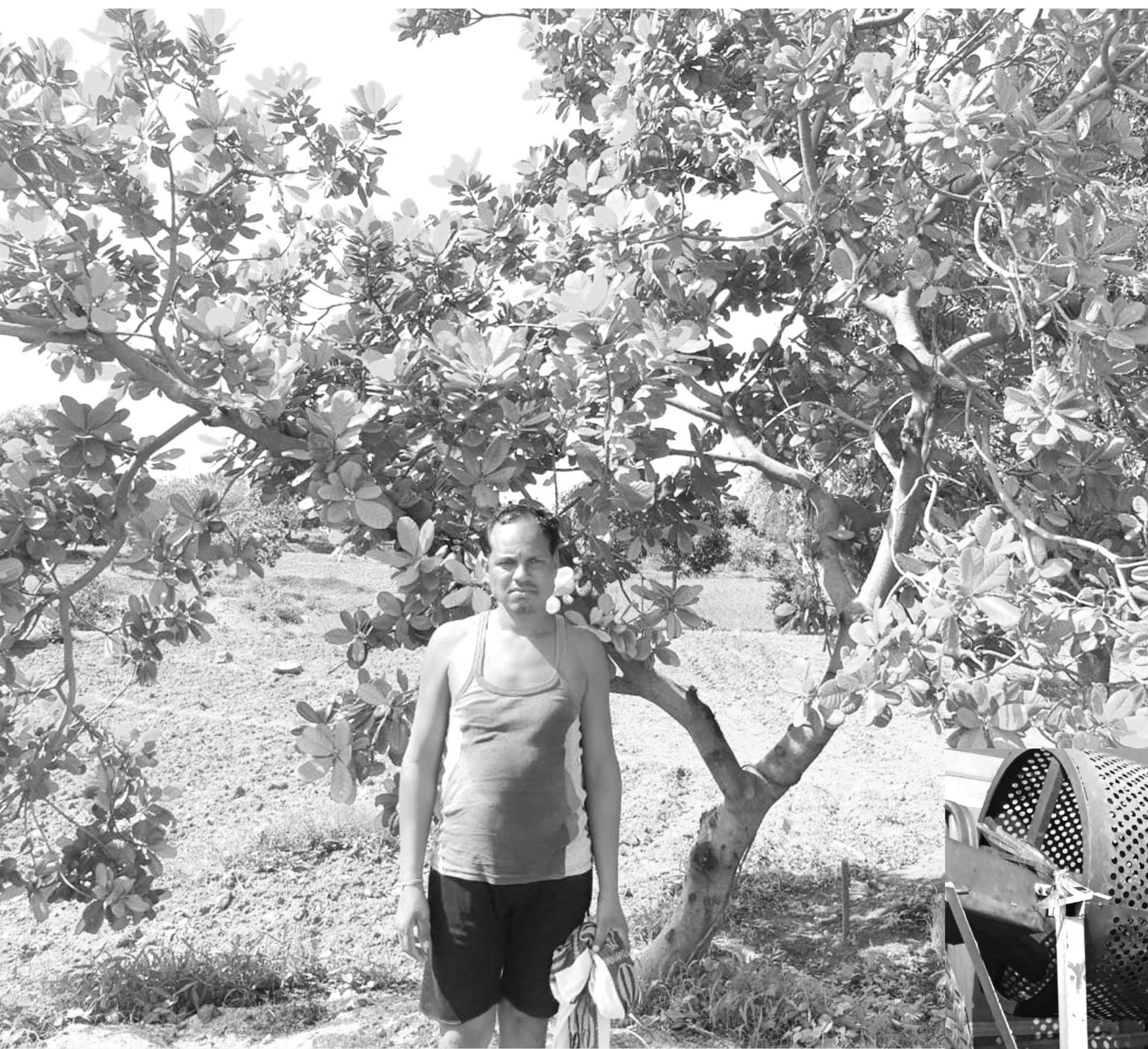 काजू बनी बेल और फंदे पर लटक गए किसान