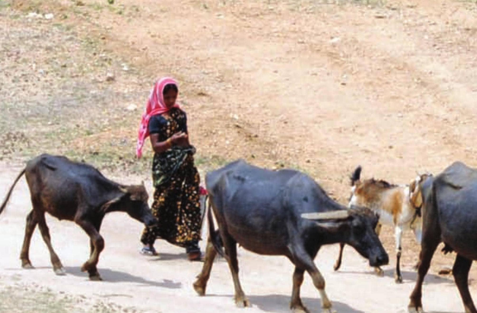 लौकडाउन में पशुओं की देखभाल