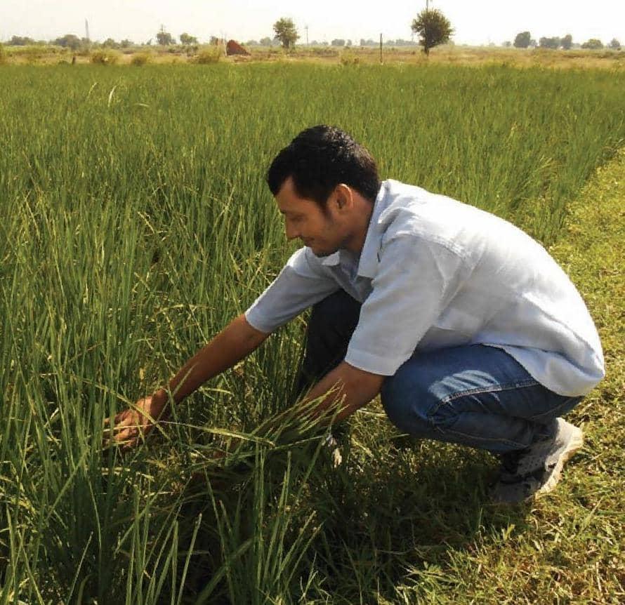 धान की फसल: रोगों और कीटों से बचाव