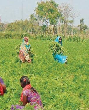 युवाओ ने की पहल तो खेती में मिली सफलता