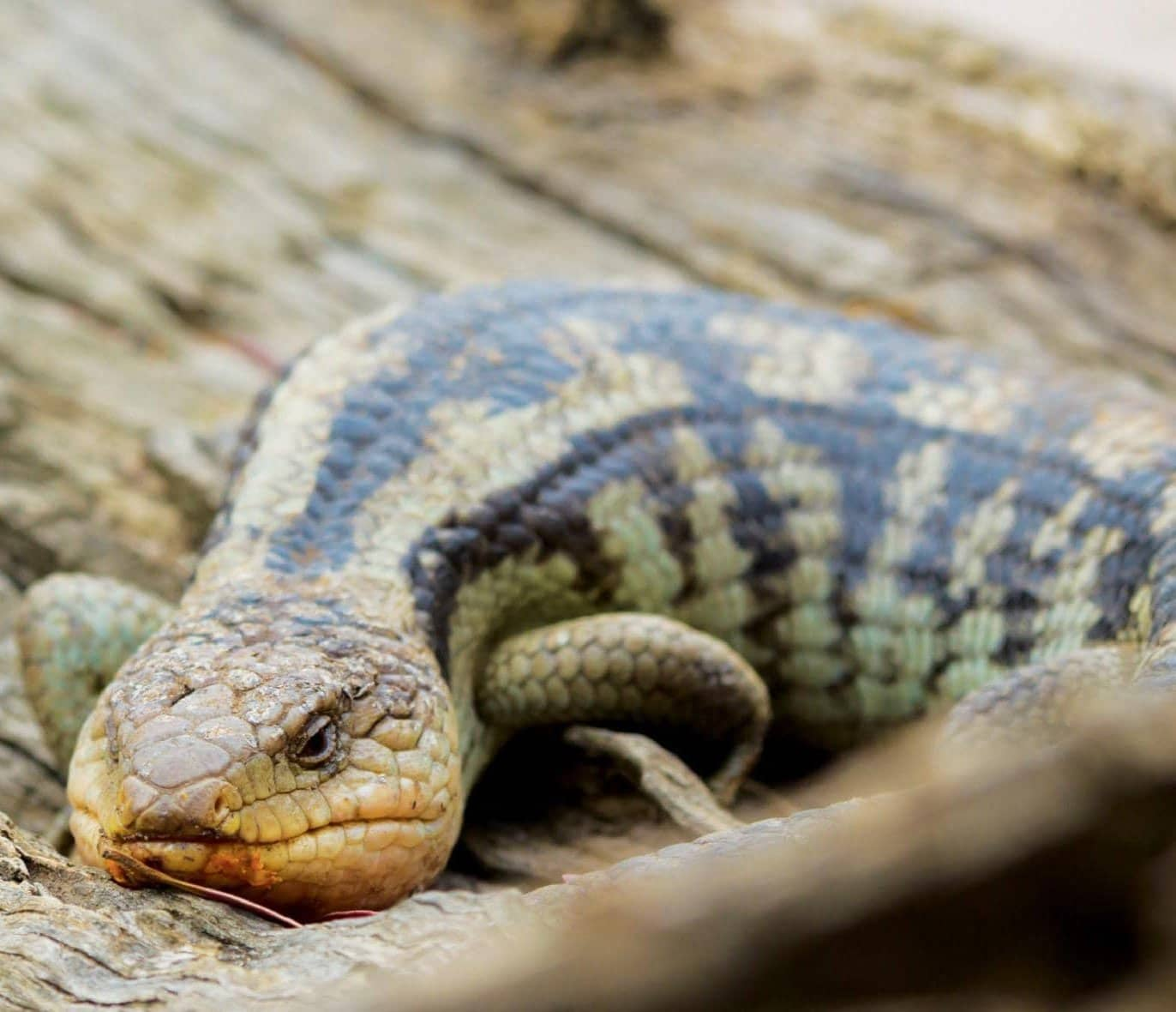 Backyard Reptile Park