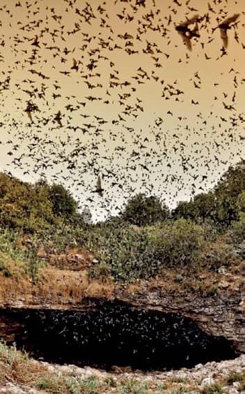 Profitable Wonders: Batting for bats