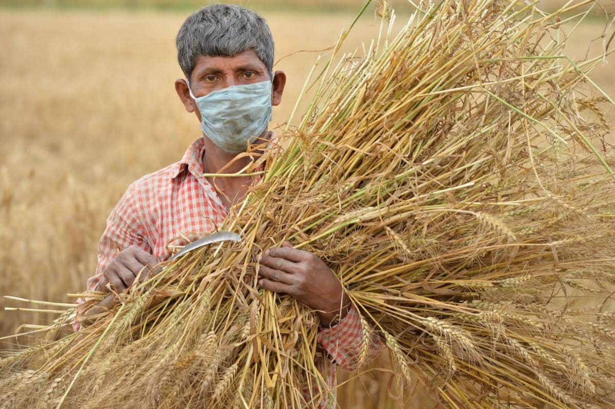 बुरा दौर बीता, कृषि क्षेत्र अर्थव्यवस्था को उबारने में मदद करेगा : रिपोर्ट