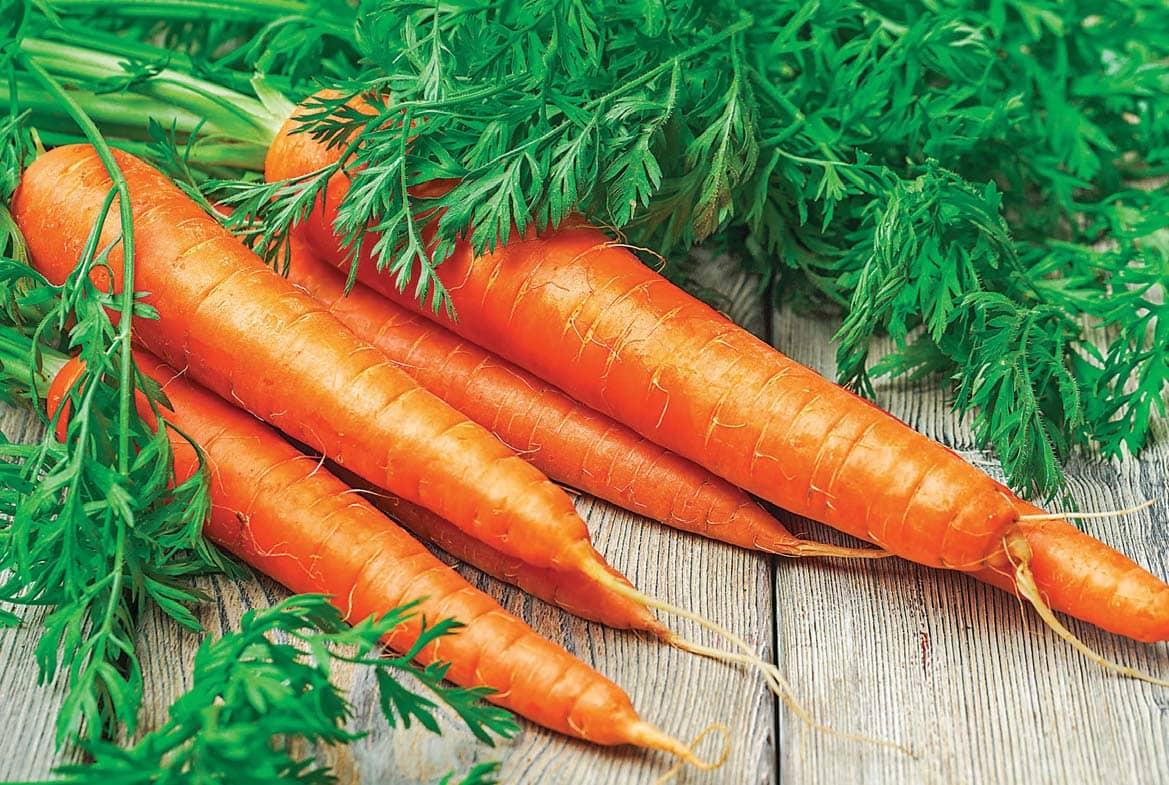 सर्दियों में खाएं गाजर रहे सेहतमंद